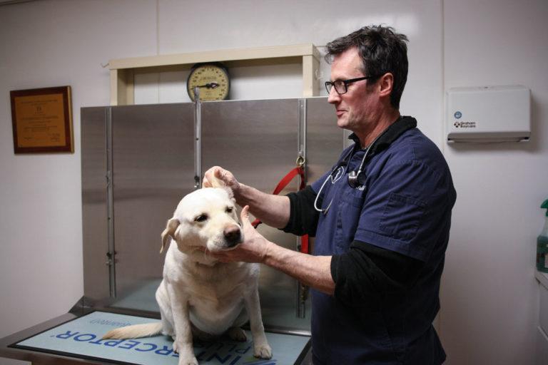 Dr. Palmer at East Hampton Veterinary Group