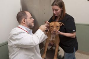 Parkville Animal Hospital in Baltimore, MD
