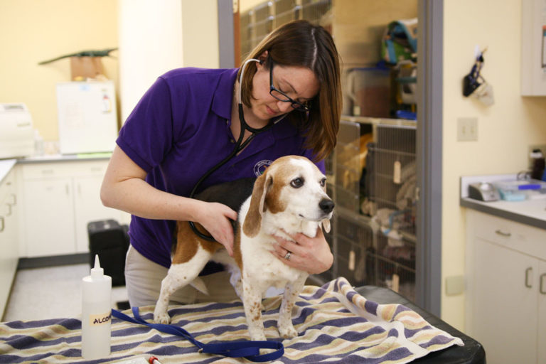 Veterinary care for dogs, cats and exotic animals